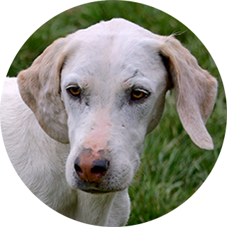 Salute - Retired Hound - Hound Welfare Fund